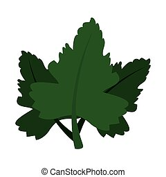 coriander leaves ingredient isolated icon