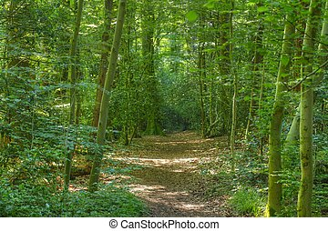 Waldweg, Deutschland, Europa