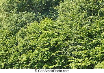 SchoenebeckWald16jHB032_3_4_5_tonemapped.jpg - Bäume, Wald,...