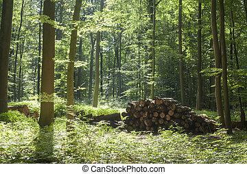 aufgestapelte Baumstämme, Deutschland, Europa