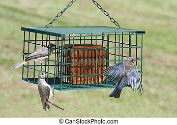 Birds on a Suet Feeder