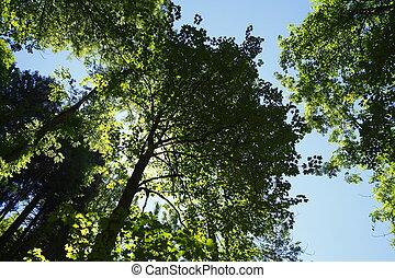 Baumspitzen im Gegenlicht, Deutschland, Europa