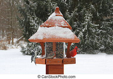 Birds on a Feeder in Snow - Northern Cardinal (Cardinalis),...