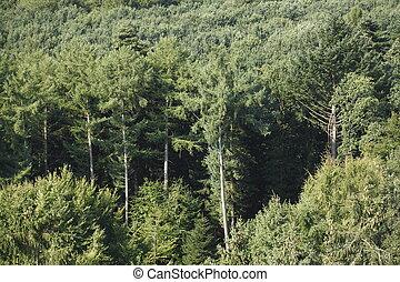 Wald, Mischwald, Baumspitzen