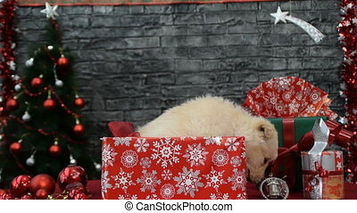 beautiful white puppy  surrounded by New Year's decoration