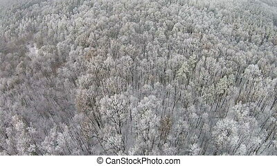 Aerial view of winter forest with snow on the trees