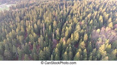Aerial view. Spring forest with snow that has not thawn -...