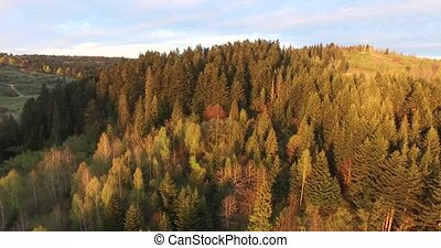 Sunset over the forest. Aerial view