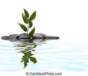 Tranquil scene. Green leaf and stones with reflection.