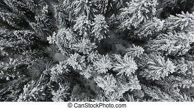 Winter pine forest in the mountains in snow. Aerial view -...