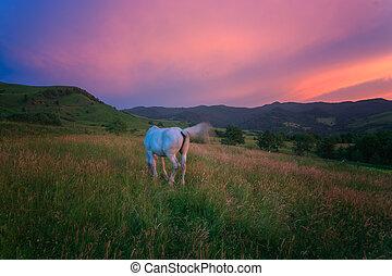 montañas, caballo,  carpathian
