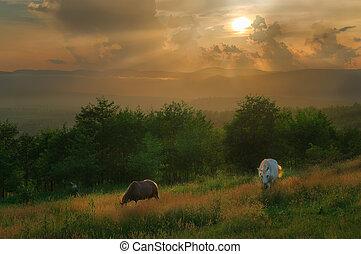 caballos, montañas,  carpathian
