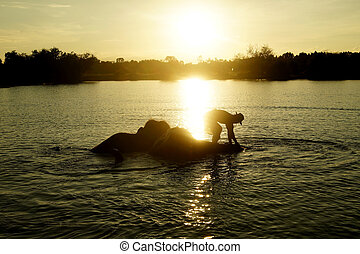 elephants taking a bath with mahout in river