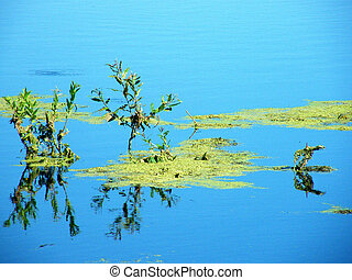 Green slime in the marsh and on the background reflected sky...