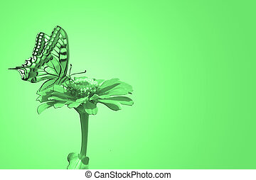 butterfly on flower - butterfly Papilio Machaon on flower...