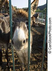 Gopher on the farm. Crimea