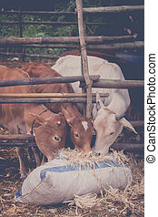 corn husk and cows - corn husk garbage can use animal food