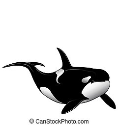 Killer whale in the form of a tattoo