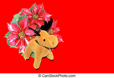 Poinsettia Christmas Star with deer moose - Euphorbia...