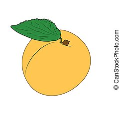 apricot - The yellow apricot on the white background.
