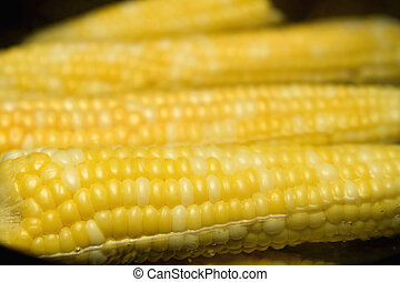 ears of corn - pot of boiling water and many ears of corn...