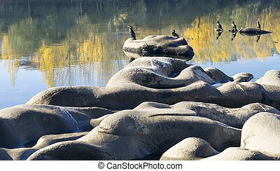cormorants basking in the rocks - Photo of cormorants...