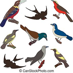 Collection of vector images of american birds. Isolated on...