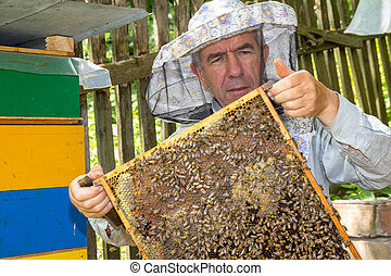 Bees on honeycomb with capped brood