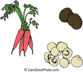 Set of fresh vegetables for your design