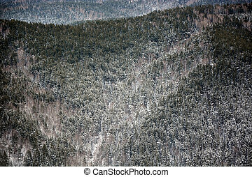Taiga forest from the top