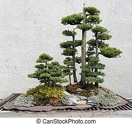Miniature Bonsai trees - Bonsai and Penjing landscape with...