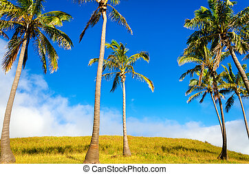 Easter Island Palm Trees - Palm trees on Easter Island near...