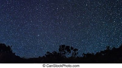 Panorama of forest in the background of the starry sky. TimeLapse