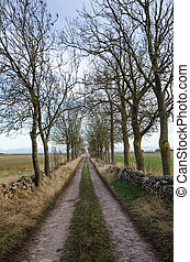 Country road lined by trees