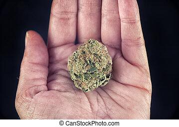 Hand holding marijuana bud - Macro detail of hand holding...