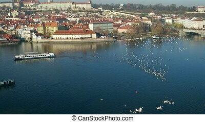 Vltava river white swans and distant tourist boat. Prague on...