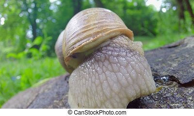 a snail puts out its horns - small snail horns out process...