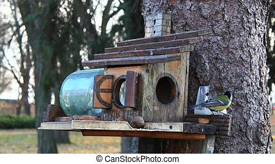 titmouses and nuthatch on the feeding-rack seeks the...
