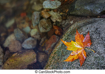 Colorful yellow leaf near the creek.