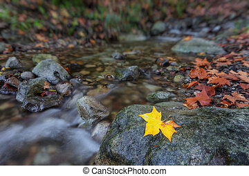 Autumn concept creek in the forest.