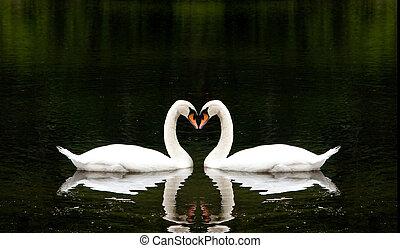Romantic Swans