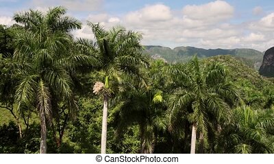 View Of Cuban Fields Mountains Hills Countryside In Vinales...
