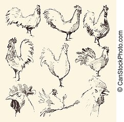 Set hand drawn roosters, vector sketch