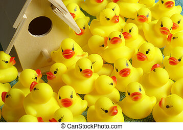 Rubber Duck Homeland - This is where all the rubber ducks...