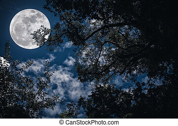 Silhouette of the branches of trees against the night sky in a full moon. Outdoors.