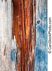 Decayed wood detail