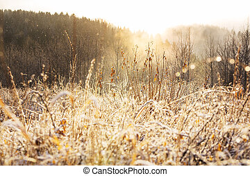 Frozen grass - Close-up shot of the frozen grass in the...