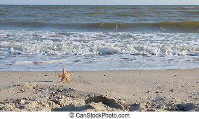 Zoom starfish sticking in the sand beach. Natural background