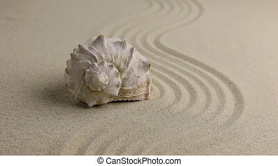 Zoom seashell lying on the sand beach. Natural background