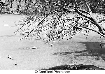 Photo of snow-covered trees and ice river.